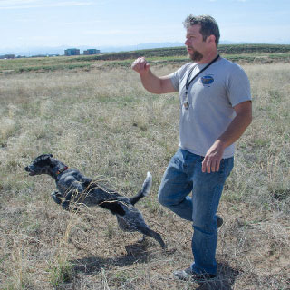 Denver Dog Trainers: Thomas Aaron CPDT-KA, ABCDT