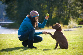 Three Week Intensives - Denver Dog Trainer