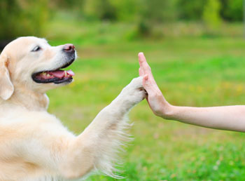 Board And Train Clinics Dog Training Classes Denver Fetchmasters